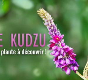 Le Kudzu une plante à découvrir