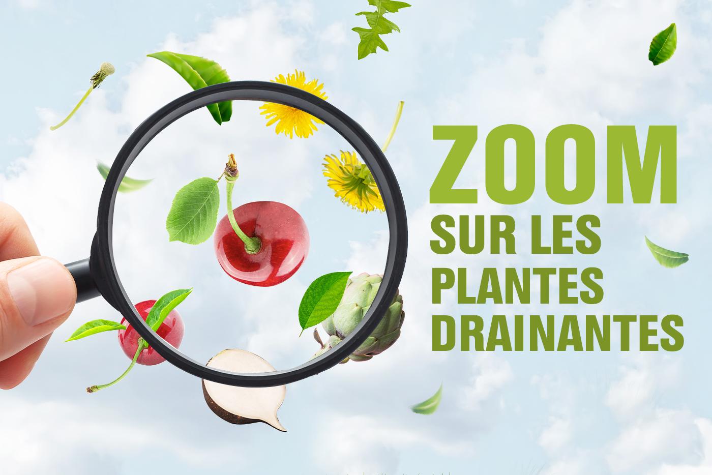Zoom sur les plantes drainantes